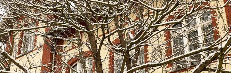 Slider-Schule-Baum